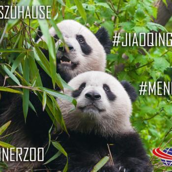 Berliner Zoom OCS Pandas